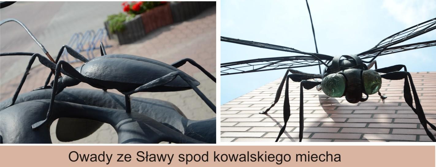 owady kowal